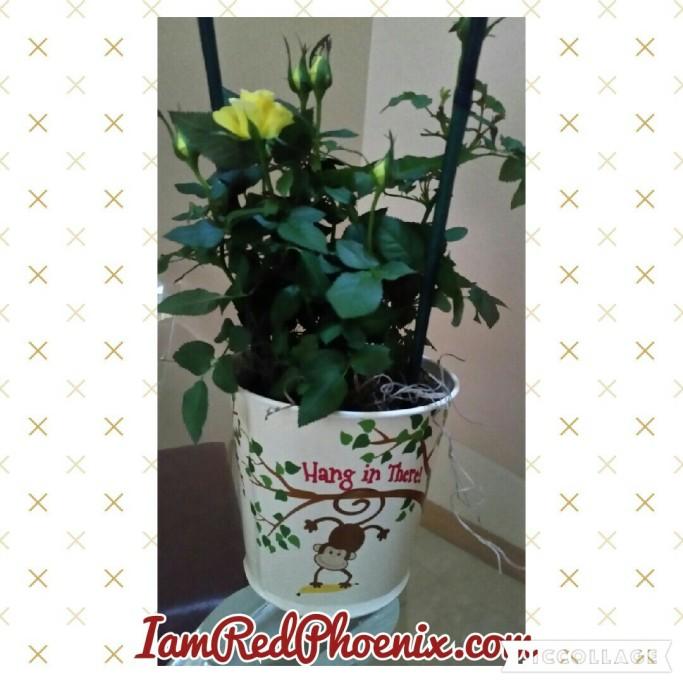 Roses 021216.jpg