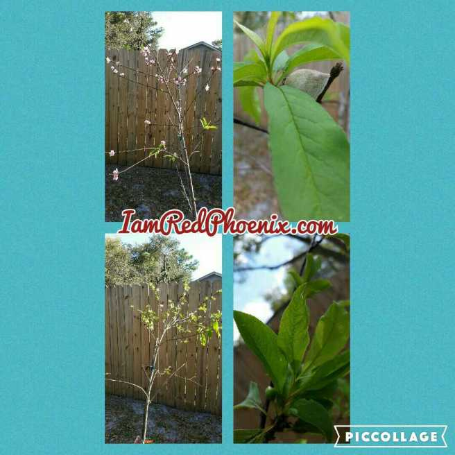 Our fruit trees 032316